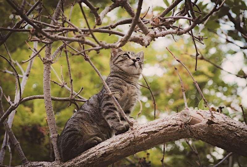 éviter les disparitions de votre chat