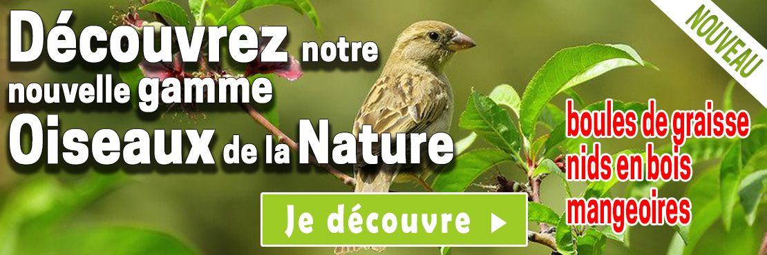 nouveautes oiseaux de la nature