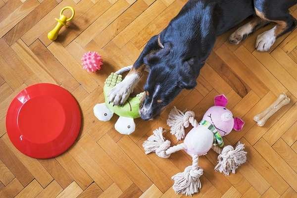 quel jouet pour occuper votre chien