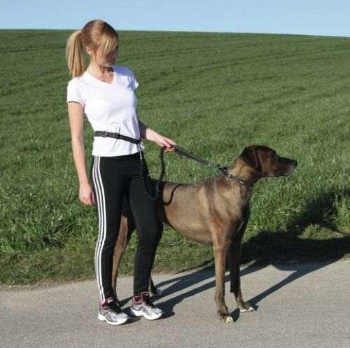 Laisse de jogging active avec ceinture pour chien
