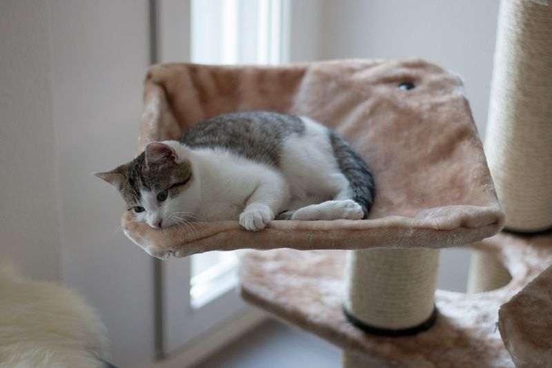 Mon chat fait ses griffes sur mon canapé : astuces et conseils pour sauver les meubles