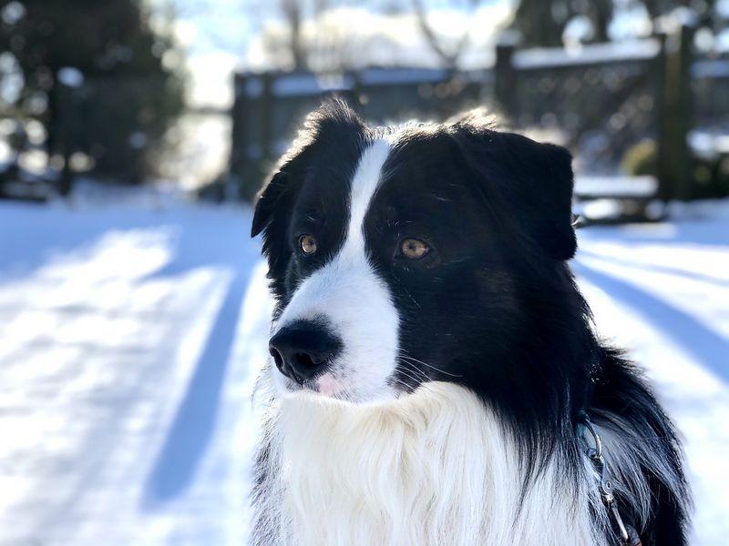 chien protégé du froid hivernal