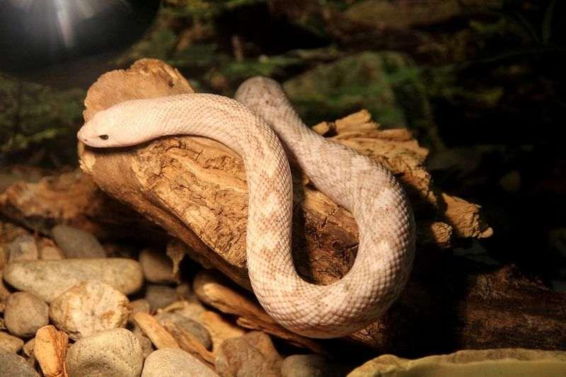 Quel terrarium pour serpent terrestre / semi-arboricole