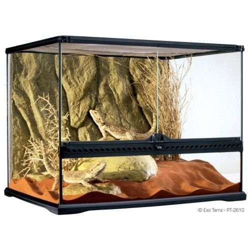 Terrarium pour petit serpent semi-arboricole