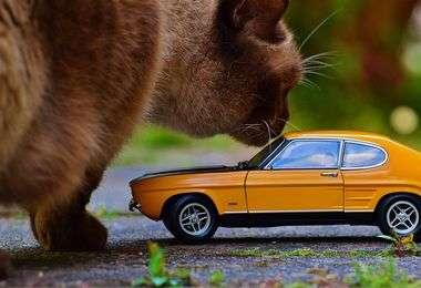 Quelle caisse de transport choisir pour son chat