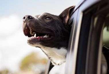 Cage et panier de transport pour chiens