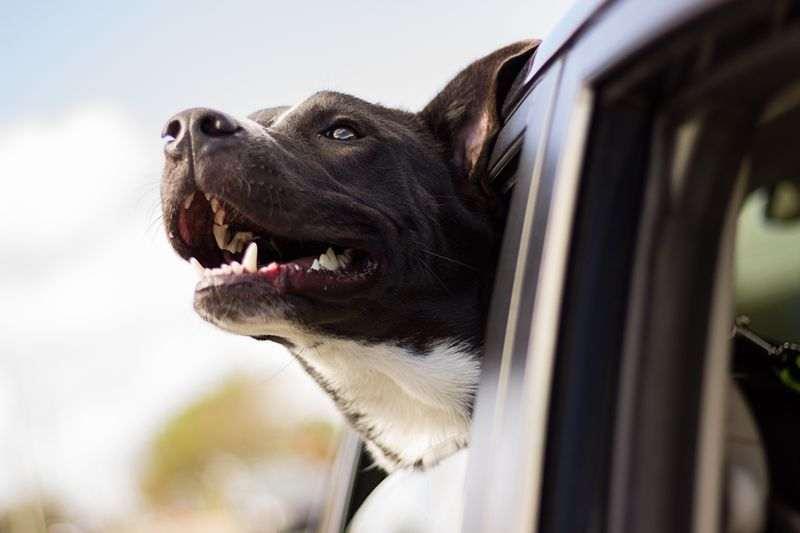 Comment transporter en toute sécurité son chien en voiture, en train ou en avion